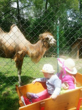 new friends Children Siblings Boy Girl Cart Animals Zoo Family Time Sunday Green Sunny Day Son Daughter Camel Water Blooming Growing