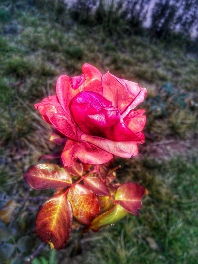 EyeEm Ready   Flower No People Nature Plant Day Petal Fragility Beauty In Nature