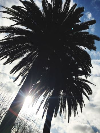 Palm Tree Tree Low Angle View Nature Sky No People Scenics Outdoors Day Tree Trunk Beauty In Nature Palm Frond Barcelona Barcelona, Spain SPAIN Welcome To Black