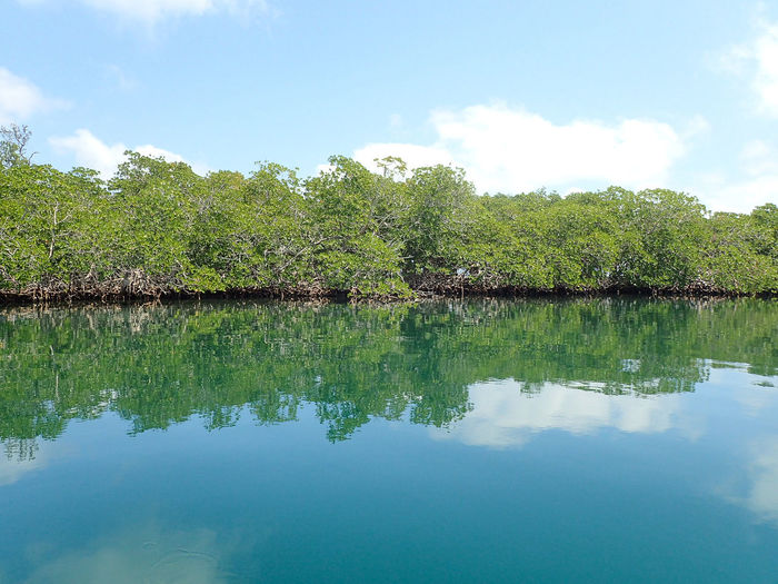 Beauty In Nature Blue Calm Cloud Cloud - Sky Day Green Color Growth Idyllic Mangroves Nature No People Non-urban Scene Outdoors Reflection Scenics Sky Tranquil Scene Tranquility Tree Water Belize  Travel Photography Travel Travel Destinations