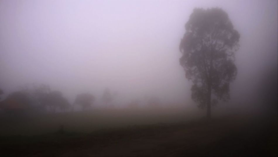 Countryside Fog Fog And Trees Foggy Day Neblina Pedra Bela Silent Hill Tree