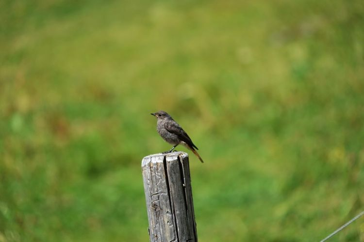 Animal Themes Animal Wildlife Animals In The Wild Bird Day Focus On Foreground Nature No People One Animal Perching