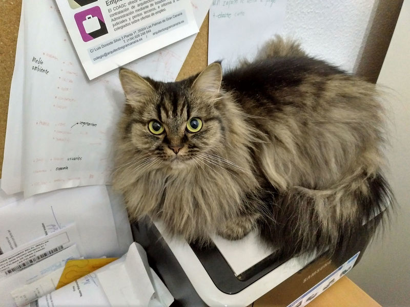 My cat sitting on my printer Cat Cat Photo Cat Photography Domestic Animals Domestic Cat Domestic Pet Feline High Angle Vew Indoors  Looking At Camera Looking Up Lying Lying Down Mammal One Animal Papers Pet Pet Photography  Printer