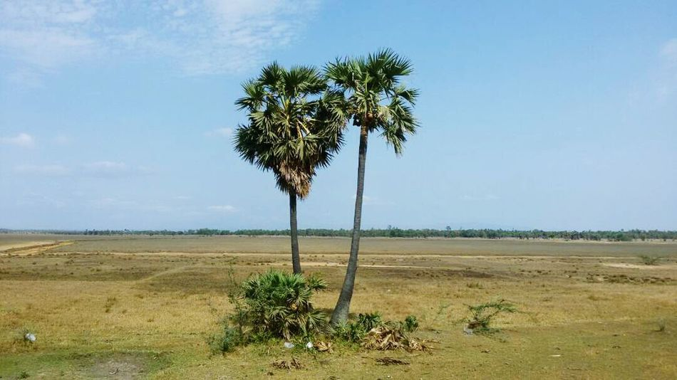 Tree Palm Tree Landscape Day Cloud - Sky Growth Scenics Outdoors Nature No People Beauty In Nature Water Sky Grass