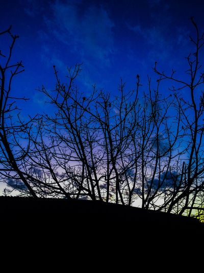 Bare Tree Branch Silhouette Tree Sky Nature Tranquility