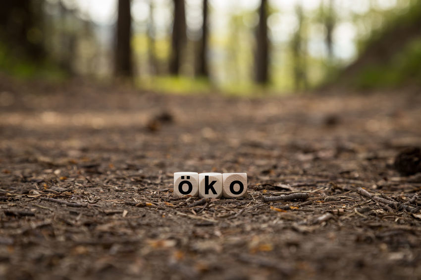 Capital Letter Close-up Communication Day Direction Forest Fun Humor Land Nature No People Number Outdoors Selective Focus Sign Surface Level Text The Way Forward Tree Western Script öko