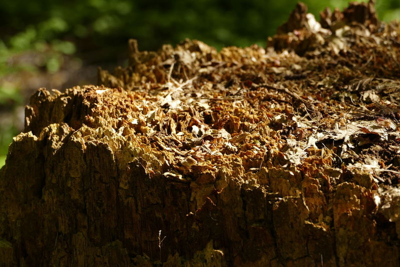 Baumstumpf Forest Nature No People Textured  Vergehen Wood - Material Ökosystem