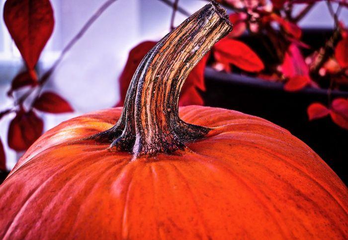 Autumn Autumn Colors Close-up Food Halloweentime Nature Pumpkin Vegetable