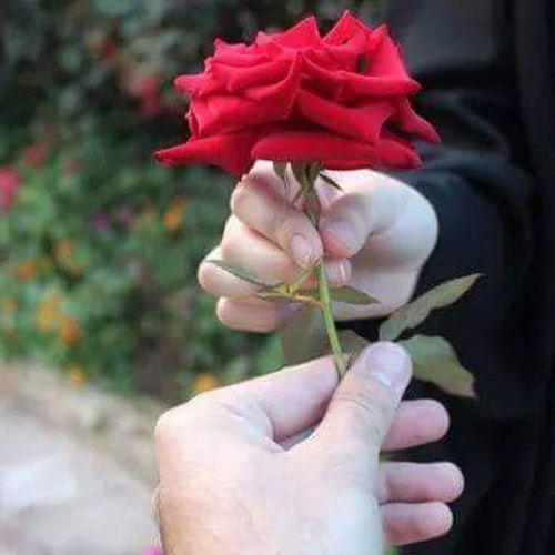 هذه الوردة لجميع متابعيني مساء_الخير مساء_الورد الورد_للورد
