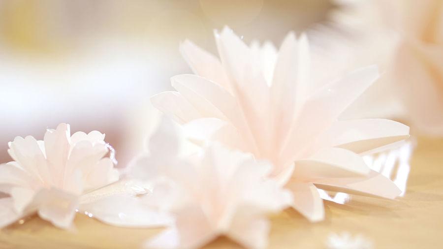 Soft pastel flower for wedding or valentine's background
