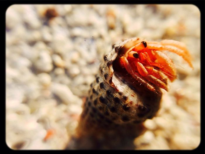 Beach Macro IPhoneography Matt_scythe taken with iPhone 5 camera attached with ōlloclip macro lens.