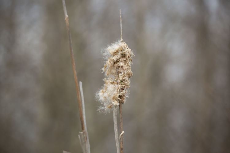 Close-up of wilted plant