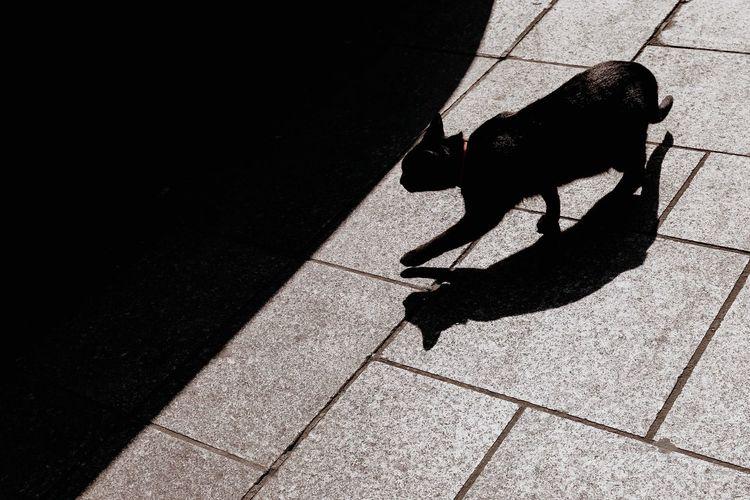 Cat Shadow Domestic Domestic Animals Pets Sunlight Mammal One Animal Day Pet Leash Street Nature Animal Animal Themes The Art Of Street Photography