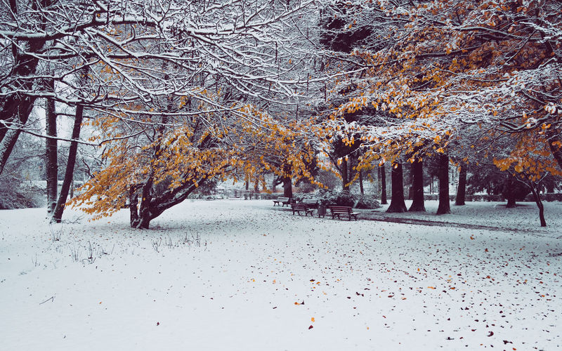 Trees on snow covered landscape during autumn