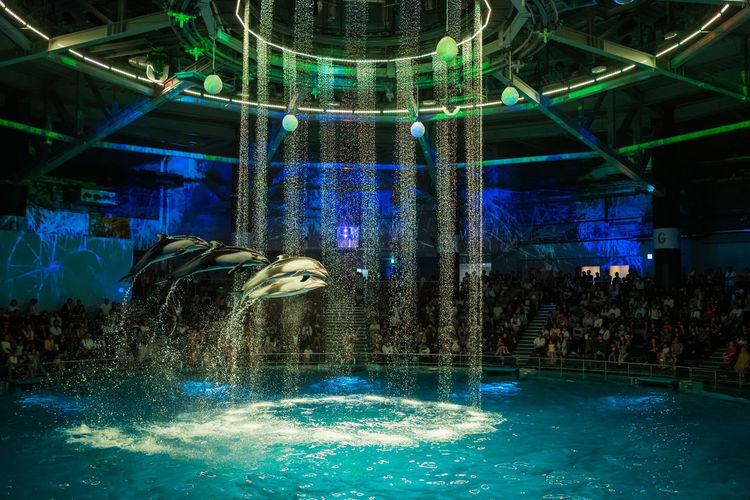 Illuminated swimming pool in aquarium