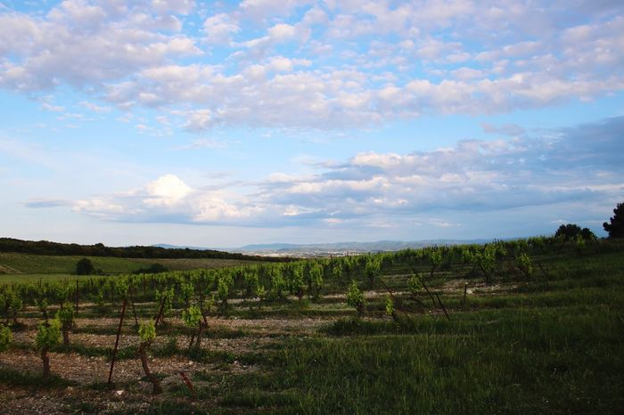 Landscape Field Scenics Nature Agriculture Tranquility Sky Tranquil Scene Beauty In Nature Rural Scene No People Cloud - Sky Growth Grass Outdoors Day Tree Vineyard France Carcassonne Carcassone, France