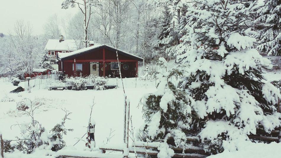 Winterlandscape Taking Photos Snow ❄ Winterwonderland