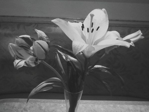 Flower Petal Flower Head Plant Nature Beauty In Nature Indoors  Close-up Freshness No People Fragility Day Lily Nature's Beauty Beauty In Ordinary Things Nature Life Reno, NV EyeEmNewHere Adapted To The City Blackandwhite Colorless Black & White Lily Lily Flower Freshness