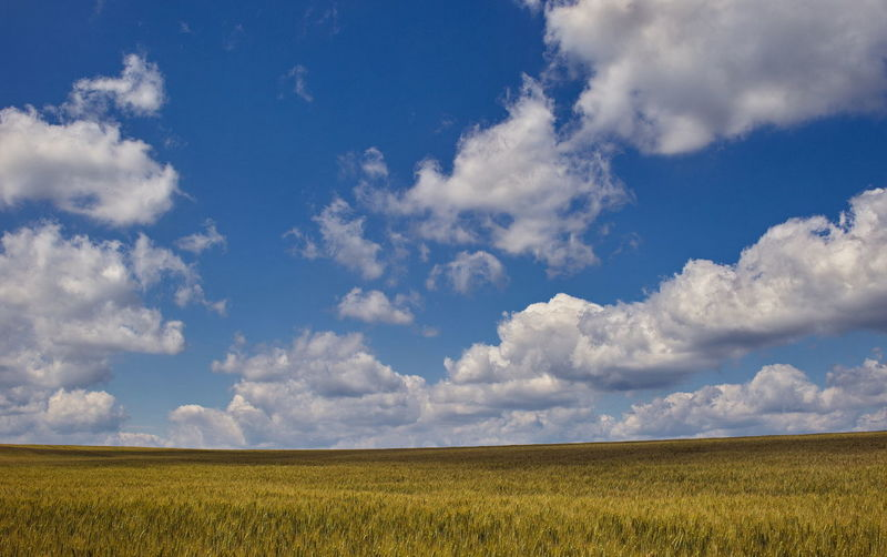 Agriculture Beauty In Nature Blue Cereal Plant Cloud - Sky Crop  Day Field Grass Growth Horizon Over Land Landscape Nature No People Outdoors Rural Scene Scenics Sky Tranquility Wheat