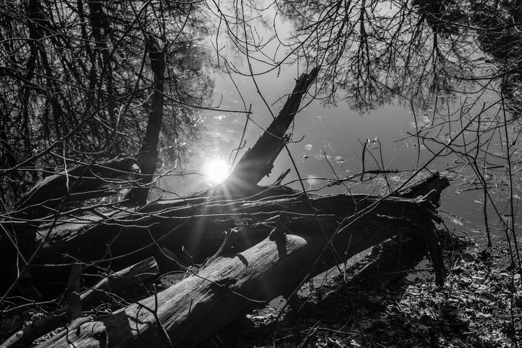 wood in the sun Reflection Reflections In The Water Sun Tranquility Tranquil Scene Outdoors Bare Tree Sunbeam Lake No People Branch Water Nature Tree Sunlight Wood Black & White Black And White