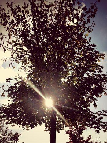 EarlGrey Sunflare Autumn Hug A Tree