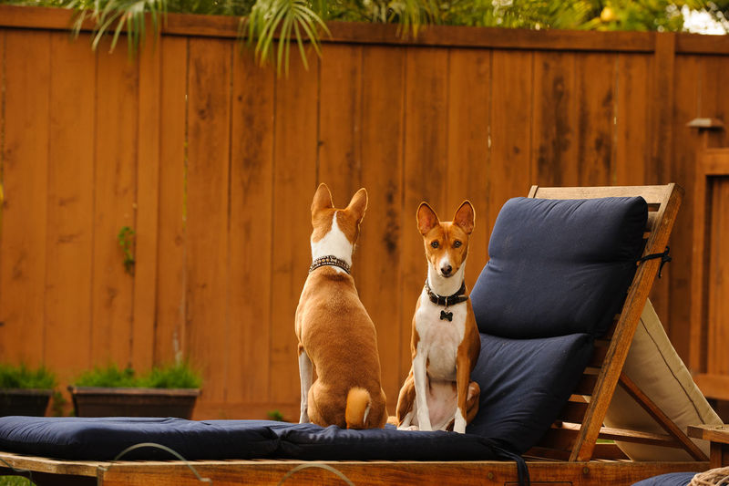 Dogs sitting outdoors