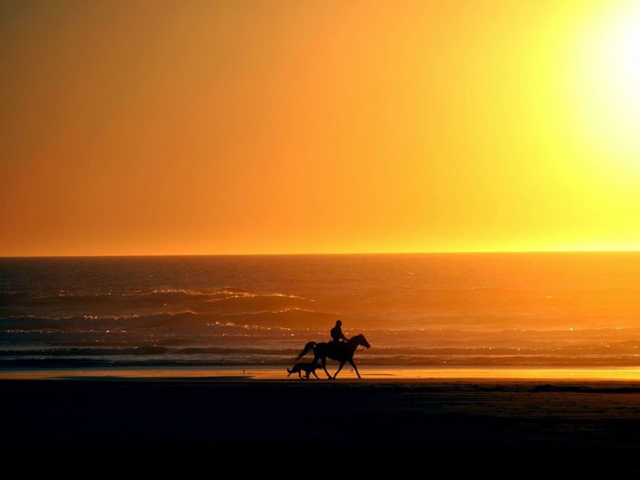 Pacific Northwest  Ocean Sea Sky Water Sunset Horizon Horizon Over Water Silhouette Beach Beauty In Nature Scenics - Nature Land Nature Orange Color Horseback Riding Ride Outdoors Horse Capture Tomorrow