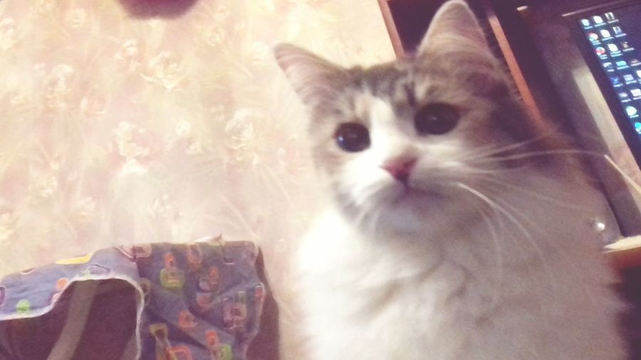 Это моя кошка First Eyeem Photo