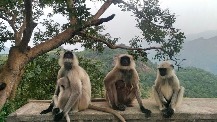 Group Fotoz. Tree Nature Monkey Mammal India Publish Magazine Worldwide_shot Indianphotographer EyeEmNewHere Photosfromindia EyeEm Vision Mobilephoto Indiapictures Abstract Photography Visionphotography Abstract Group The Week On EyeEm