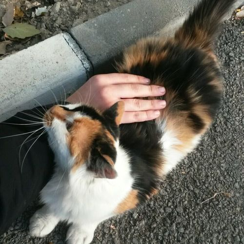 Cat♡ Fur Light And Shadow Hand Lovely