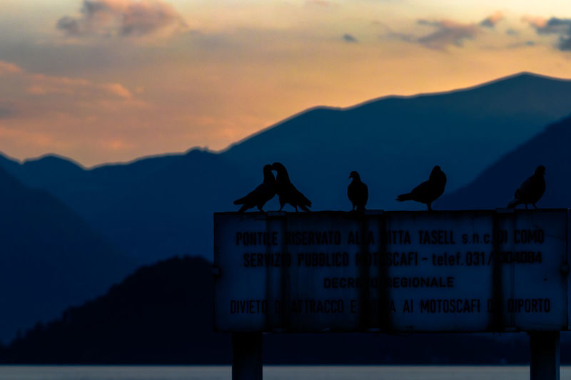 Dove Love Animal Themes Animal Wildlife Animals In The Wild Beauty In Nature Bird Communication Dark Dark Photography Darkness And Light Day Dove Dove Love Love Mountain Nature Outdoors Road Sign Scenics Silhouette Sky Sunset Text EyeEmNewHere The Great Outdoors - 2018 EyeEm Awards