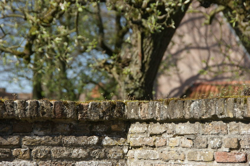 Brick Wall Brick Wall Close-up Focus On Foreground Heusden Old Buildings Spring Stone Wall