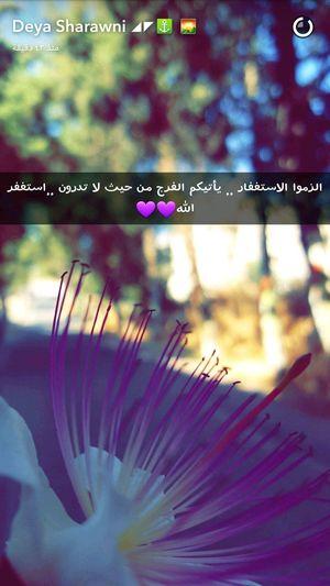 Deya ( رمضان_كريم يا رب ضيفوني سناب ❤ كل_عام_وانتوا_بخير_جميعا الإستغفآر Snapchat™ Deya.dudu👻 Lovely Have A Nice Day! Flowers Palestine Enjoying Life Hello World EyeEm Taking Photos ستاد_دورا Love This  Hebron Snapchat )