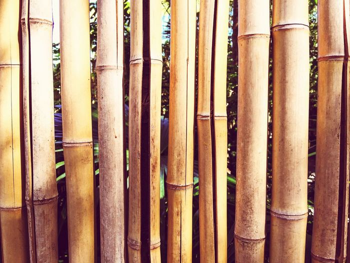 Bamboo Fence Bamboo Tropical Plants Plant Stems Stalks Fence Vertical Lines Vertical Fence Bamboo Fence Flora Nature Background Texture Brown Tan Bamboo Shoots Design Pattern