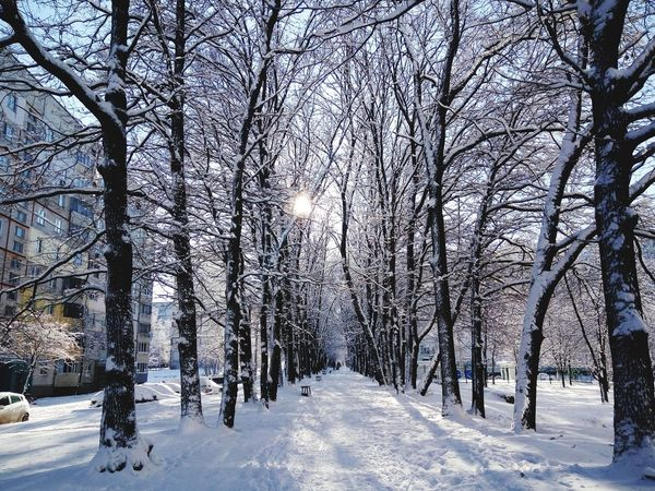 Winter in the city Snow Winter Cold Temperature Tree Nature No People Outdoors Forest Beauty In Nature Snowing Day City