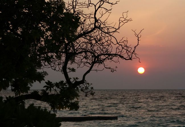 Sunset Sun Sunset_collection Sea View Silouette Branches Tree Sea And Sky