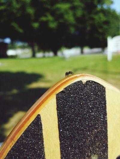 Longboarding Gravityskateboards Gravityboard Passenger spider