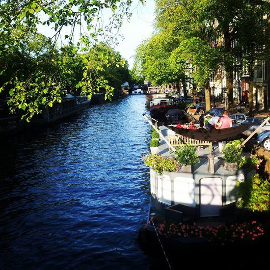 Amsterdam River Tree Water