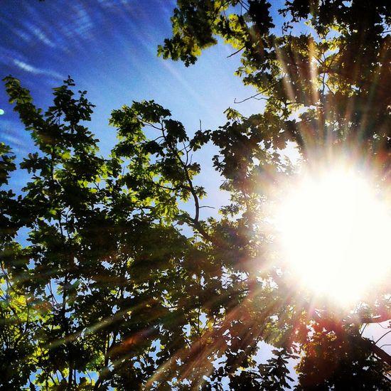 Beauty In Nature Sunlight Sky Day Sun