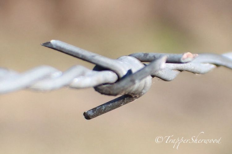 Barbed Wire Wednesday The Purist (no Edit, No Filter) Macro_collection EyeEm Best Shots - Macro / Up Close