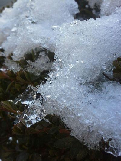 snowww! <3 #virginiaprobs