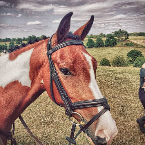 Horse Horses Taking Photos Enjoying Life IPhoneography Iphone6plus The Week Of Eyeem Check This Out