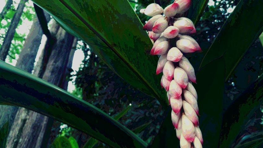 Nature Tree No People Growth Plant Green Color Leaf Outdoors Day Pink Color Flower Close-up Beauty In Nature Red Freshness Food Fragility
