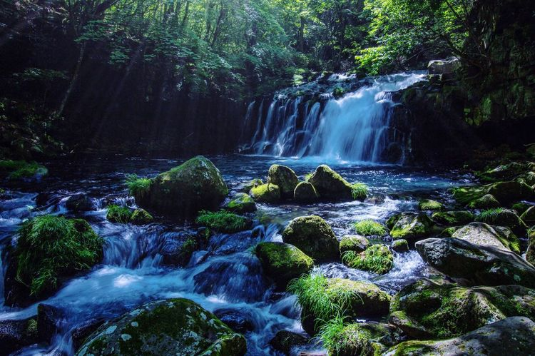 Waterfall Forest Motion Nature Beauty In Nature Long Exposure Scenics Water Tree Blurred Motion No People Outdoors Growth Day 蓼科大滝