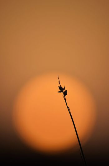 Sun Sunset Only One Desert Flower Sunset_collection Silhouette Capture Tomorrow