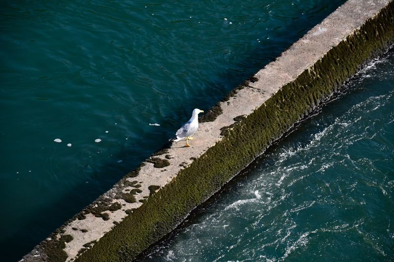 High Angle View Of Seagull Perching On Retaining Wall Amidst Sea