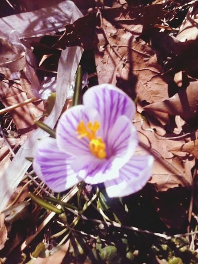 first flowers of spring Flowers Beauty Love Nature
