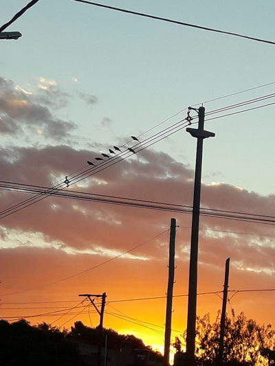 Loros barranqueros al atardecer- Parrots of canyon at sunset Atardeceres Barrio Birds Parrots Loros Aves Especie Protegida Cable Sunset Power Line  Electricity  Colour Your Horizn EyeEmNewHere