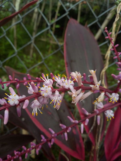 red Flower Pink Color Close-up Plant In Bloom Botany Pollen Flower Head