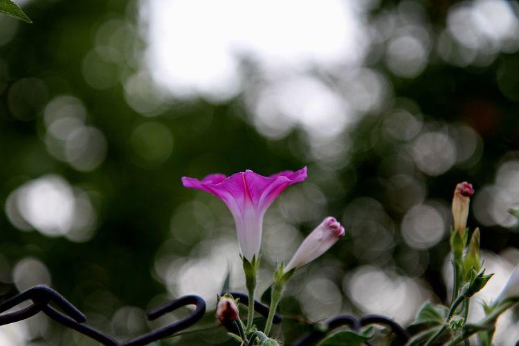 Flowering Plant